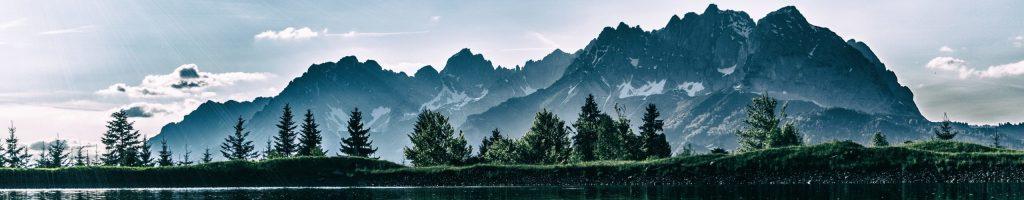 daylight-environment-forest-idyllic-459225